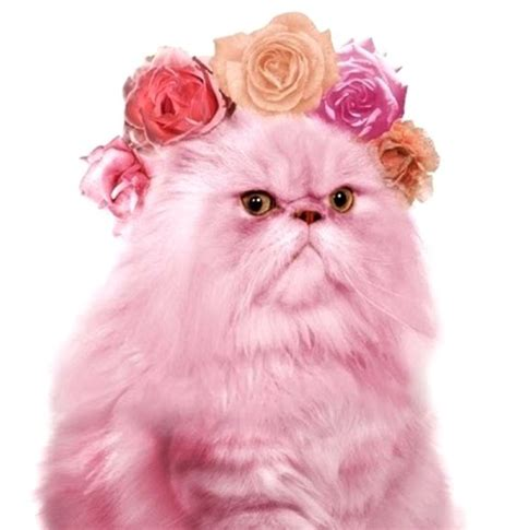 Cats Pink glitter cat pet pictures cat stuff and prettiest cat