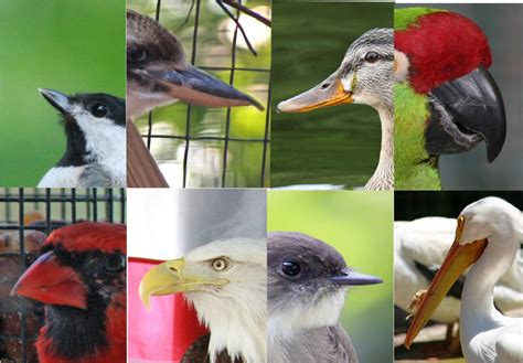 world bird sanctuary beak or bill