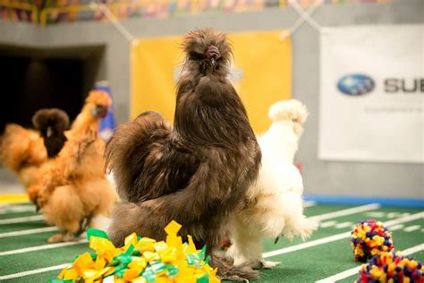 puppy bowl referee puppy bowl 2016 preview a skunk referee and vanity fair