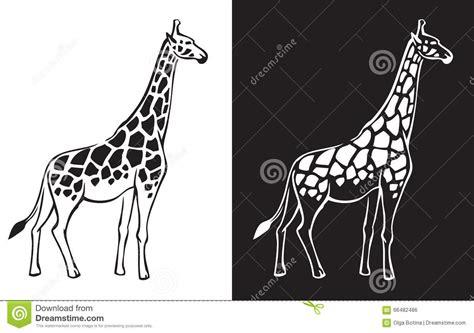 Imagenes De Jirafas Blanco Y Negro   fondo blanco y negro de la jirafa ilustraci 243 n del vector