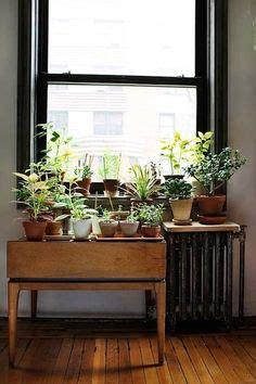 Indoor Plants Sunny Window 1000 Ideas About Indoor Window Garden On