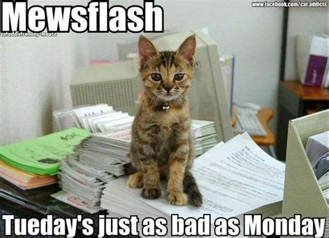 Tuesday Memes Funny - makayla et2 blog blog 23 what is your favorite day of