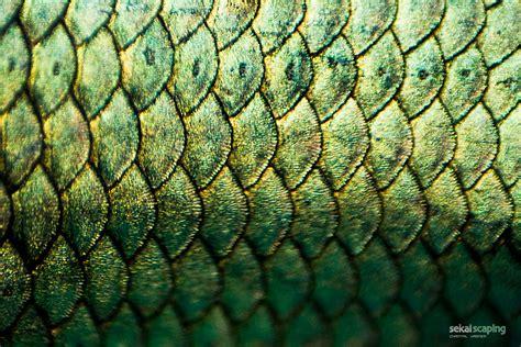 Fish Scales Wetcanvas