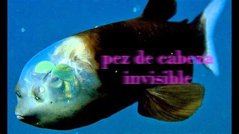 imagenes de animales raros y deformes los animales marinos m 225 s raros youtube