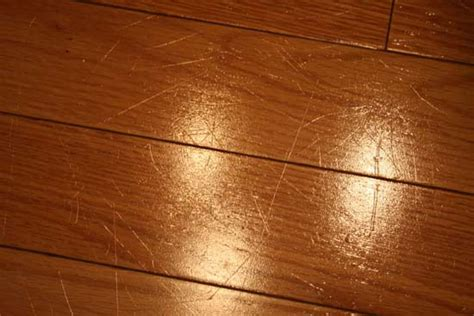 Dogs And Bamboo Floors by Pros Cons Of Trendy Bamboo Flooring