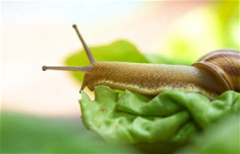cuisiner des escargots comment cuisiner des escargots