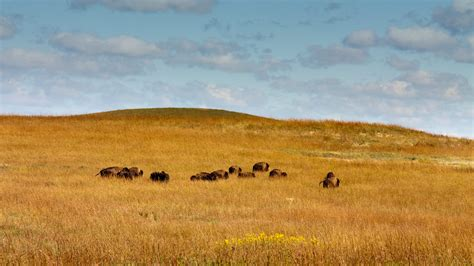 prairie images pictures of asian grasslands