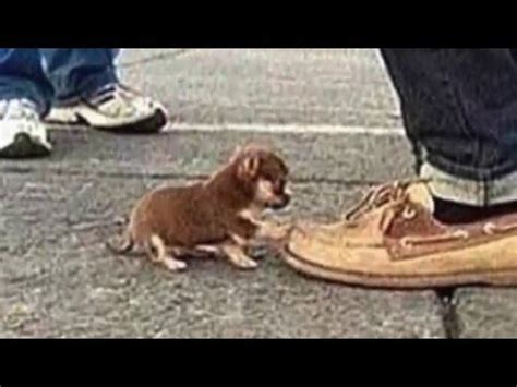 would you step on a puppy for 18 billion would you step on a puppy for 18 billion