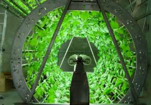 organic hydroponics could become the future of growing