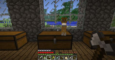 why does my sit on me minecraft why does my cat sit on chest cats