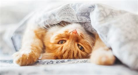 kitten pees on bed how to stop your cat peeing on bed covers and pillows