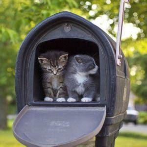 cassette della posta americane gattina nella cassetta della posta la adotta il postino