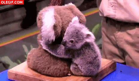 imagenes gif de koalas gif mira a este lindo koala gif 6454