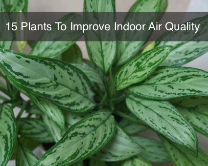 best plants for air quality 15 house plants to improve indoor air quality homestead