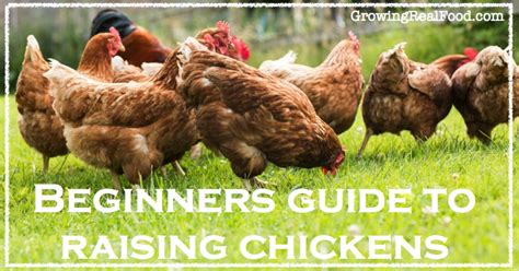 guide to raising backyard chickens guide to raising backyard chickens days an absolute