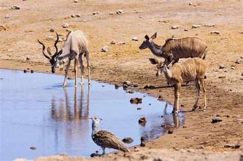 imagenes de animales que viven en el desierto los 20 animales que viven en el desierto m 225 s