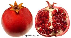 coco plum mammee apple pomegranate persimmon photos