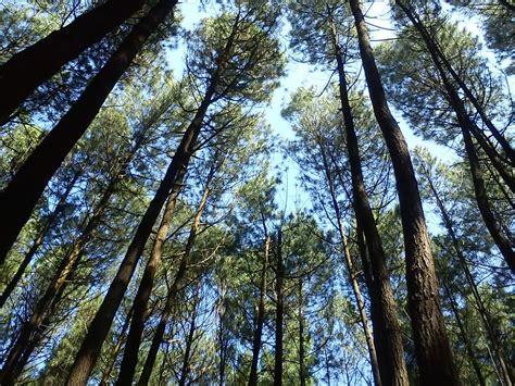 kebun buah  hutan pinus mangunan rental mobil toyota
