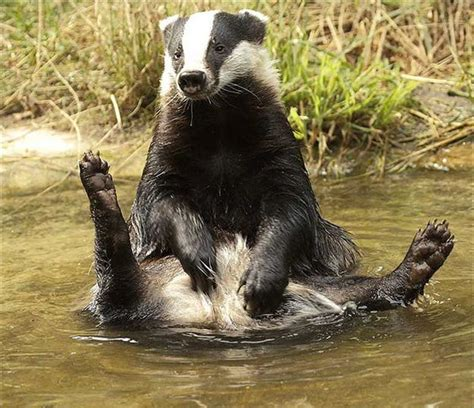 badgers bathrooms the 29 greatest moments in the history of bathtime so
