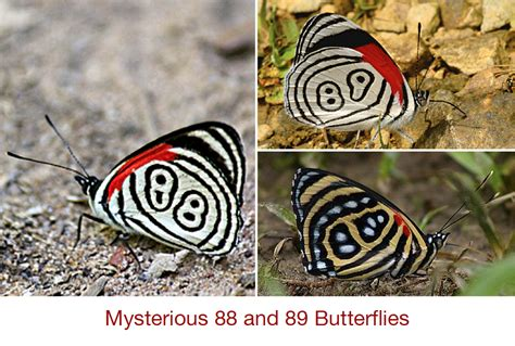 patterns in nature butterflies animal of the week patterns in nature