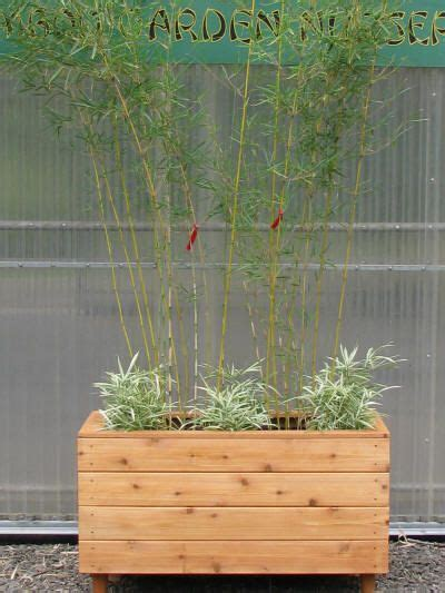 Bamboo Planter Ideas by 25 Best Ideas About Bamboo Planter On