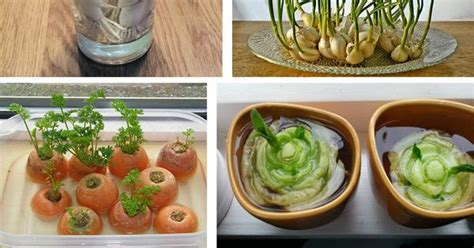 8 vegetables you only need 8 vegetables you only need to buy once then regrow
