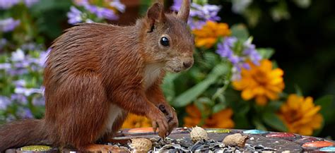 how to prevent squirrels from eating bird seed in your