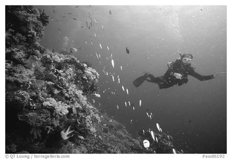 Black With List Scuba black and white picture photo scuba diver and school of