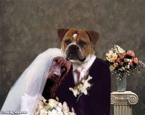 puppy wedding animal weddings pictures freaking news