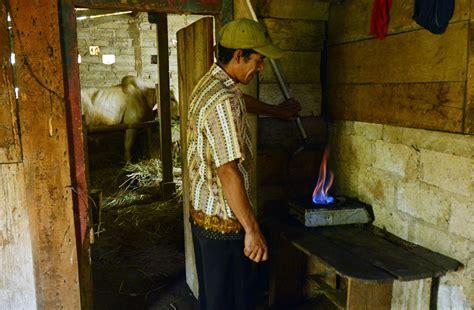 Kompor Biogas beginilah produksi biogas dengan biaya murah di kesenet