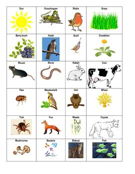 food chain template cards food web animal cards coding and questions by chelsie