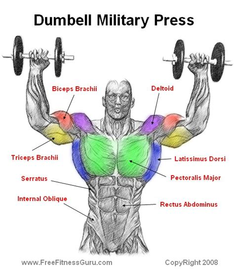 muscle groups used in bench press dumbell military press the soul s temple pinterest