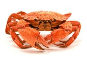 can dogs eat crab can i give my some crab can canines consume crab