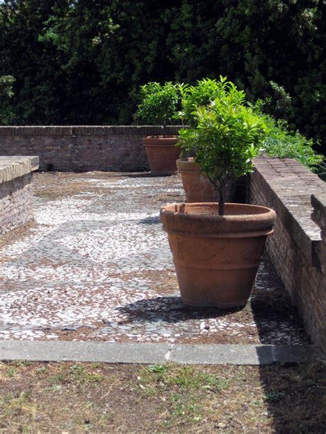 terrasse que choisir choisir un arbuste pour terrasse marie claire