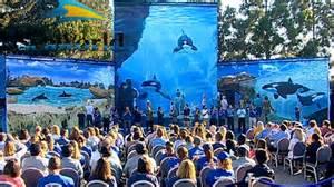 trends at seaworld orca tilikum unheilbar krank seaworld 228 ndern ihr konzept