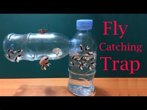 how to catch flies in house how to make fly trap at home easily to catch hundreds of