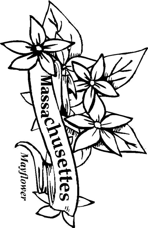 coloring pages of state flowers 50 state flowers coloring pages for kids