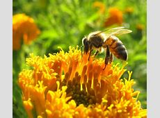 Bee Propolis: Ancient Cure for Today's Ailments Royal Jelly