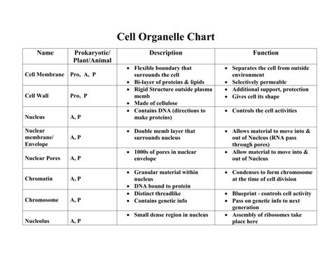 Cell Organelles Review Worksheet Answers by Uncategorized Cell Organelle Research Worksheet Answers