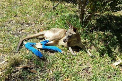 land 4 orphaned injured wildlife by theresalynne matthews