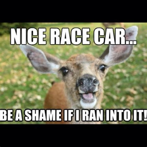 Deer Meme - the gallery for gt funny deer hunting memes