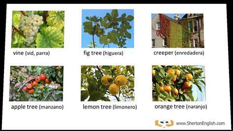 imagenes de flores y arboles vocabulario ingl 233 s 193 rboles y plantas trees plants