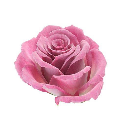 imagenes flores png flores png rosas fondos de pantalla y mucho m 225 s