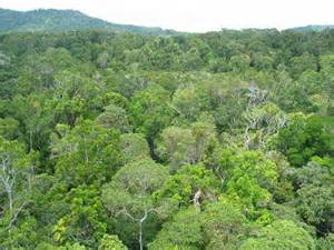 Rainforest Canopy Images by Forest