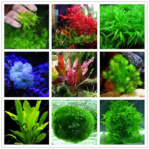 tropical water plants get cheap tropical aquatic plants aliexpress
