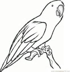 parrot coloring pages parrot printable coloring pages