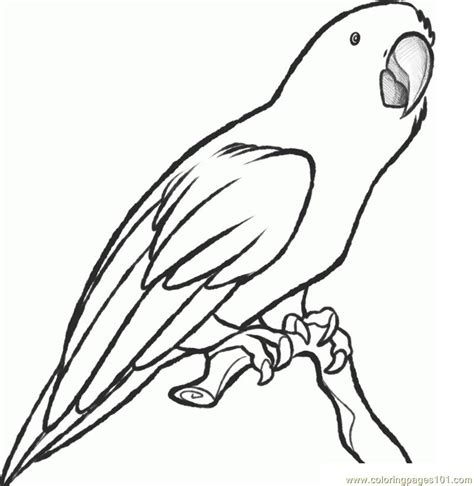 Parrot Printable Coloring Pages Macaw Coloring Page