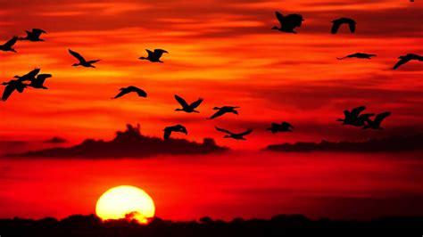 Imagenes De Animales Llaneros | paisajes llaneros