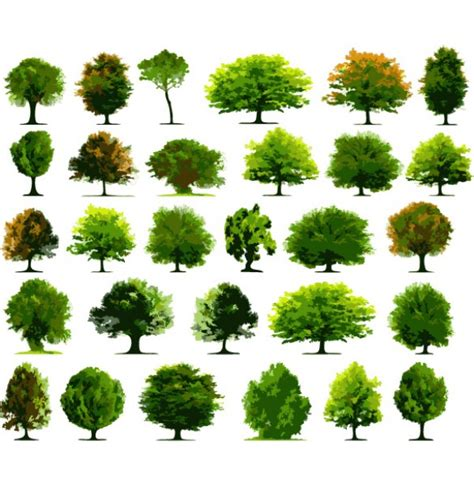 trees types 30 varieties of vector tree illustrations welovesolo