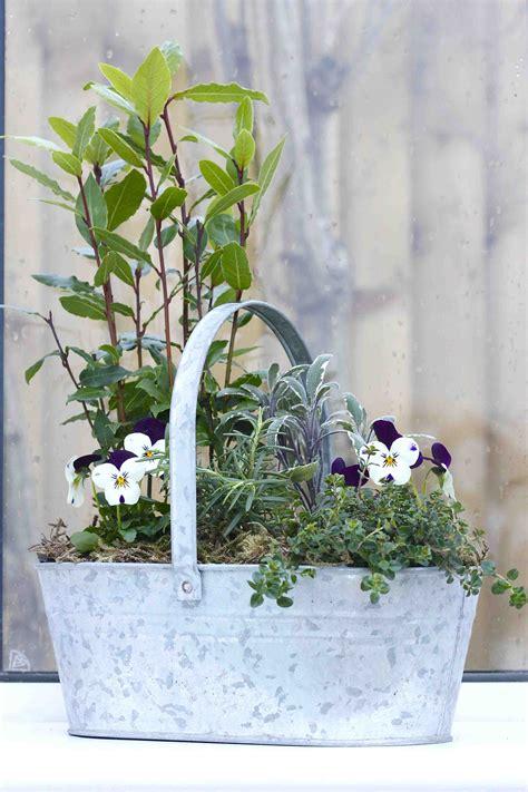 indoor herb garden containers indoor herb container zia allaway
